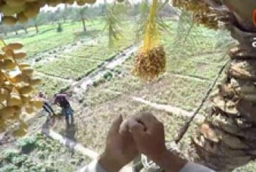 ريبورتاج (٢) | الزراعة في منطقة بحر النجف ولقاء مع المزارعين – تصوير جوي