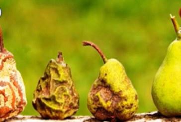بحوث واختراعات ح٣ | مكافحة آفات المحاصيل الزراعية