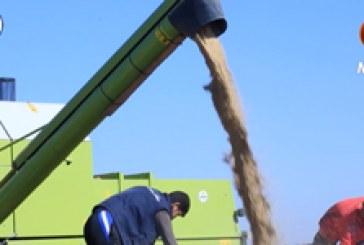 ريبورتاج (٣) | زراعة الشلب في العراق – (تصوير جوي ولقاء مع المزارعين)